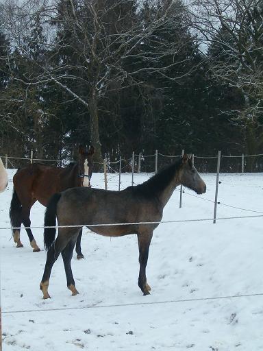 Unsere Pferde (2)