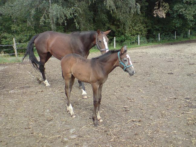 Pferdefohlen1