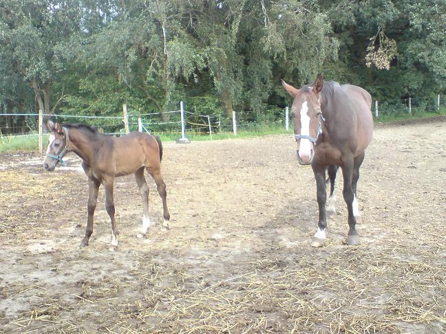 Pferdefohlen2